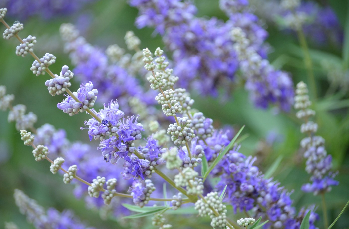 4 vitex benefits that every woman should know about | Well+Good