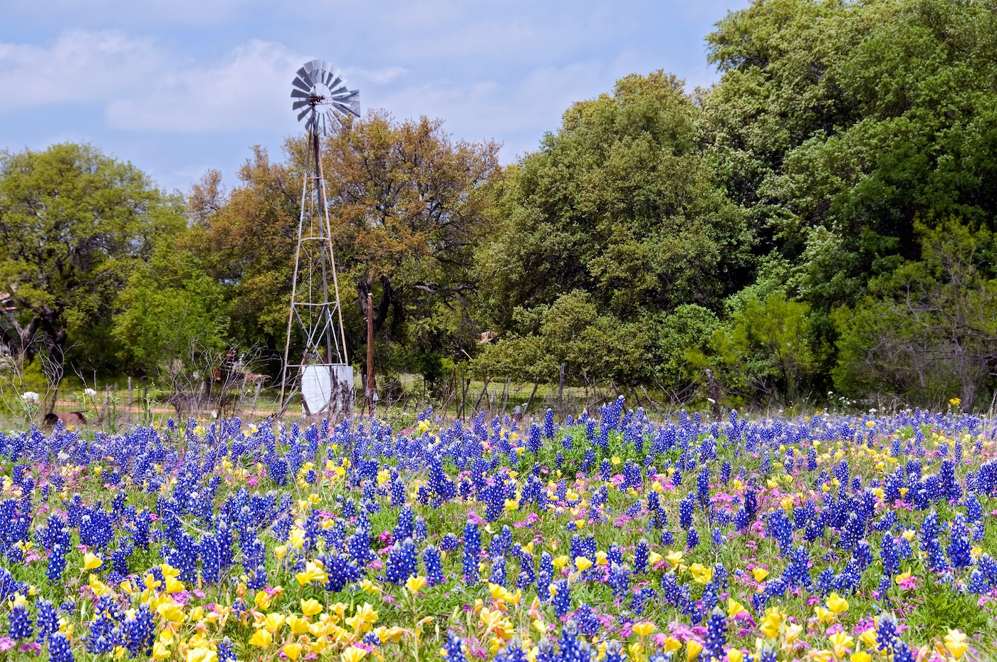 Texas state flower