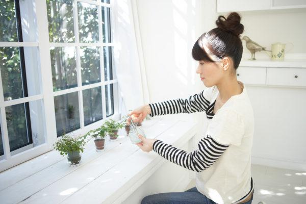 """You definitely don't want to drink """"worm tea,"""" but your houseplants will love it"""