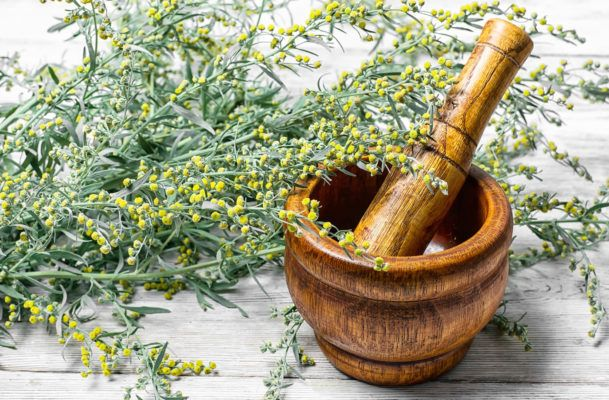Wormwood is an ancient herb with lots of health promise—here's what to know before trying it