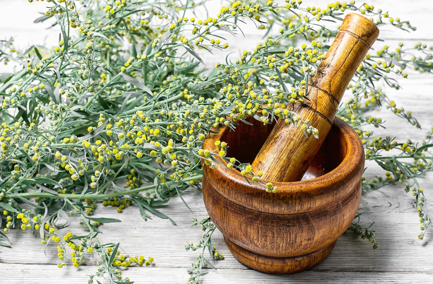 Thumbnail for Wormwood is an ancient herb with lots of health promise—here's what to know before trying it