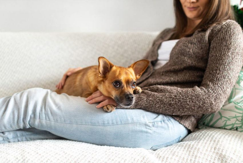 Pets can definitely handle CBD, but here's what you need to know before dosing yours