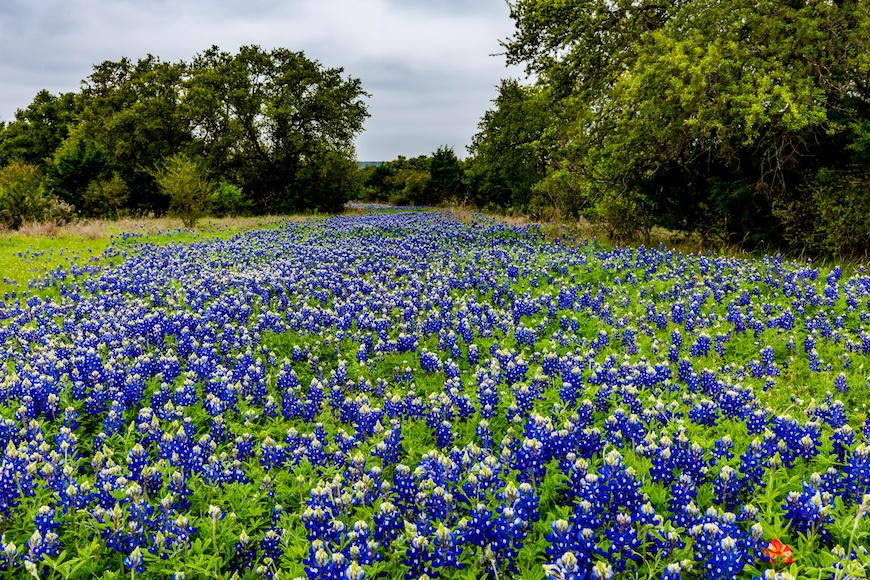 Thumbnail for Texas bluebonnets are the super bloom of the South—and we have the pics to prove it