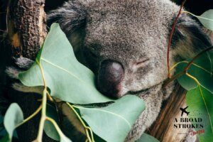 How crying cathartic tears of joy in an Australian koala sanctuary set me free