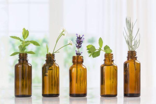 How a novice herbalist uses plant medicine in her daily routine