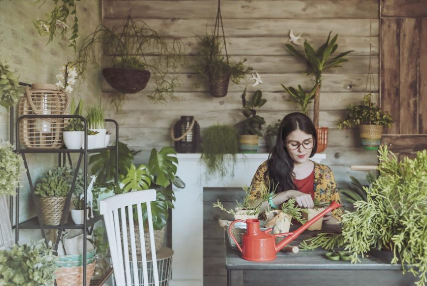 Use your zodiac sign to determine the very best houseplant for you