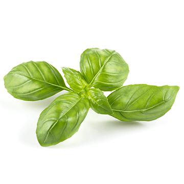 fresh basil,