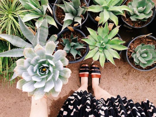 15 Gifts for Every Plant Lover in Your Life, From Your Work Wife to Your...