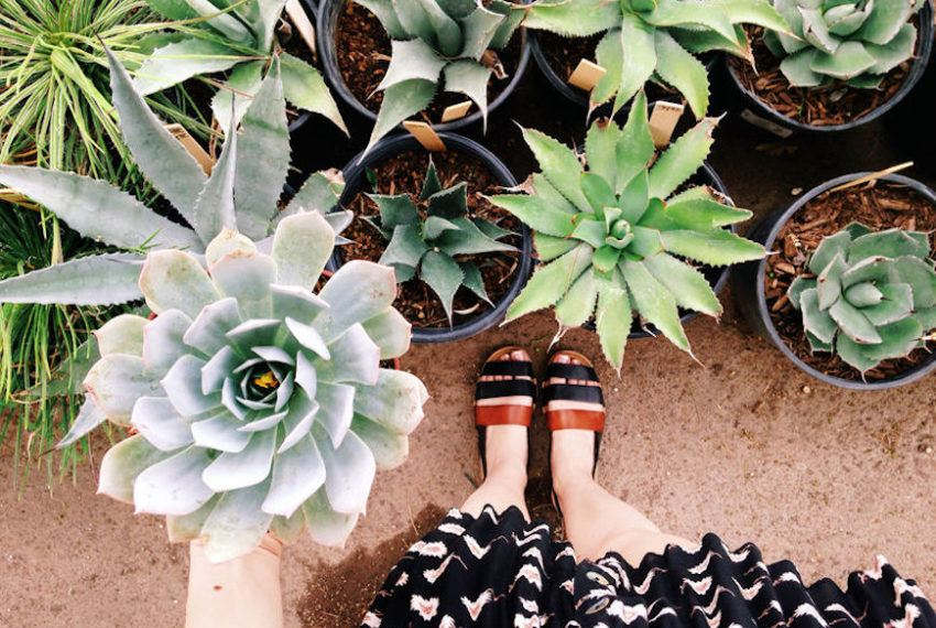 15 gifts for every plant lover in your life, from your work wife to your woo-woo BFF