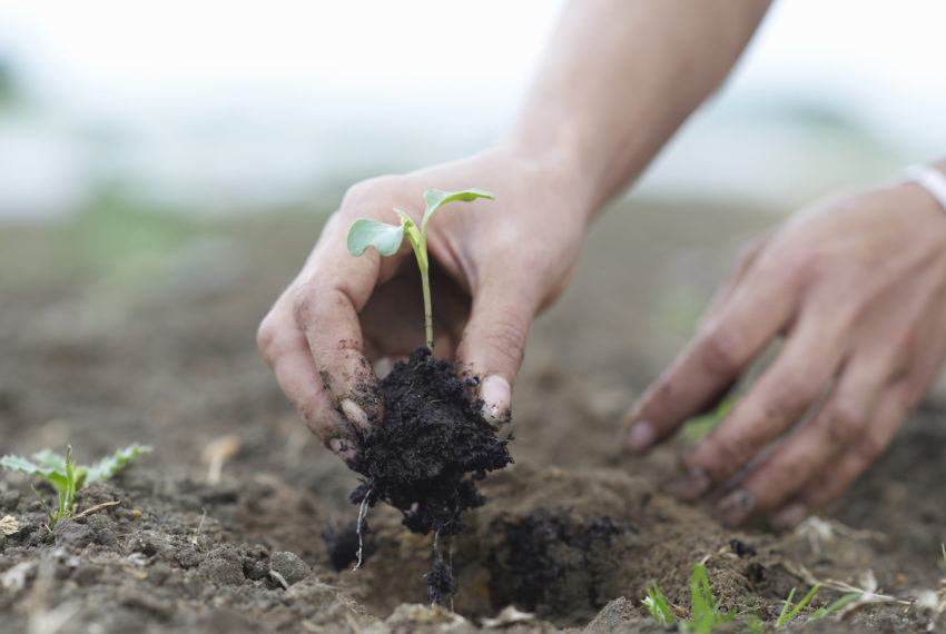 Why Regenerative Agriculture Is the Future of Sustainable Food