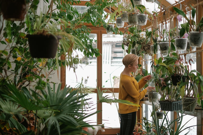 Thumbnail for 6 easy ways to keep your indoor plants alive during the dark days of winter
