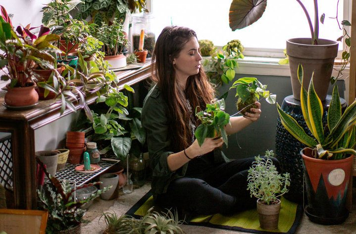 Sorry, Your Houseplants Aren't Cleaning the Air in Your Home