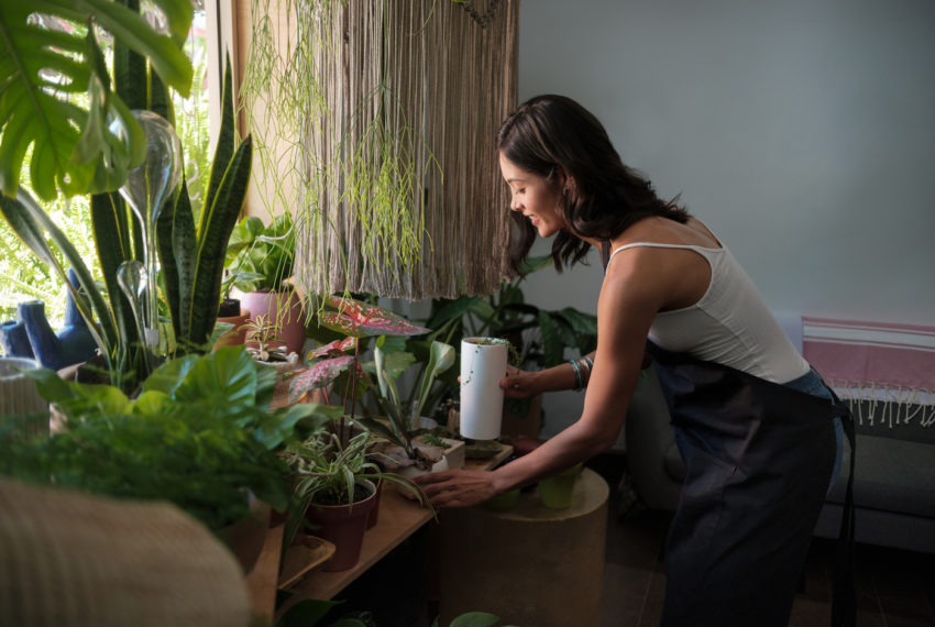 Next Year's 'It' Plant Is Going to Make Your Place Look so Rich