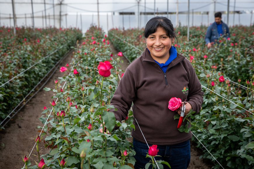 Thumbnail for 250 Million Roses Are Sold Every Valentine's Day—Here's How to Make Sure You're Buying Ethically-Sourced Blooms