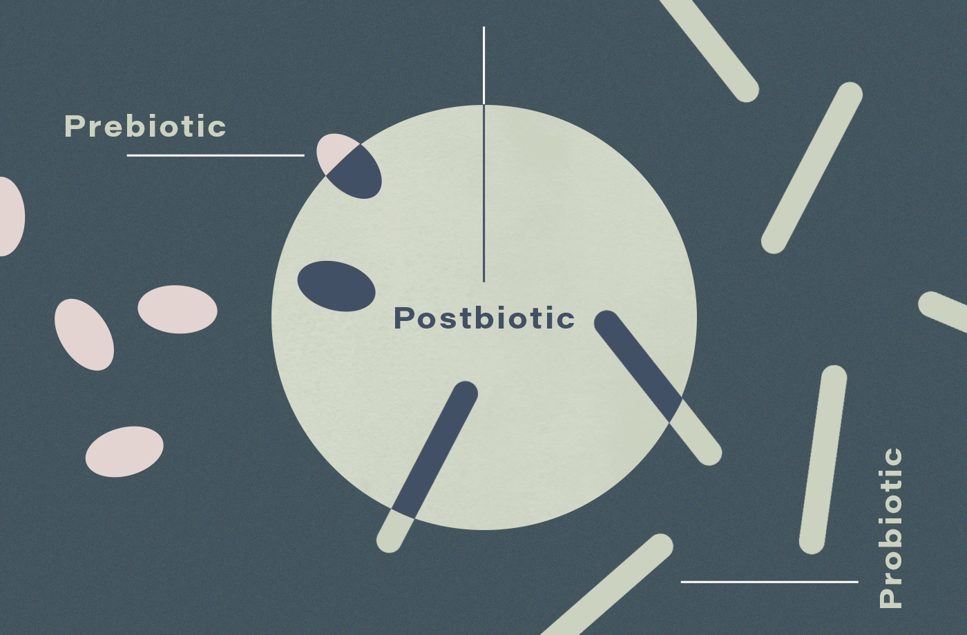 Thumbnail for Probiotics are cool and all, but have you heard about postbiotics?