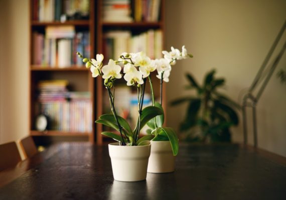 How to take care of orchids that thrive all year long—no greenhouse necessary