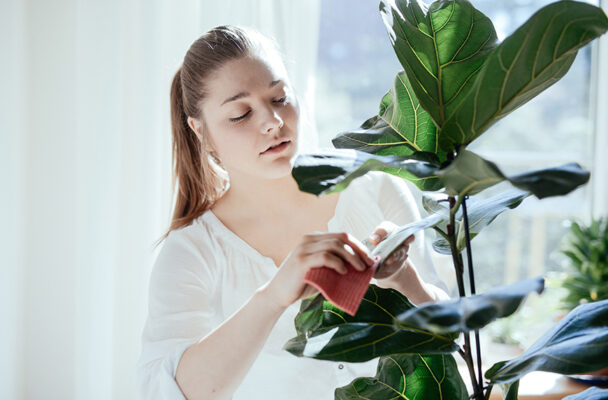 9 clues to help you identify and solve common houseplant problems