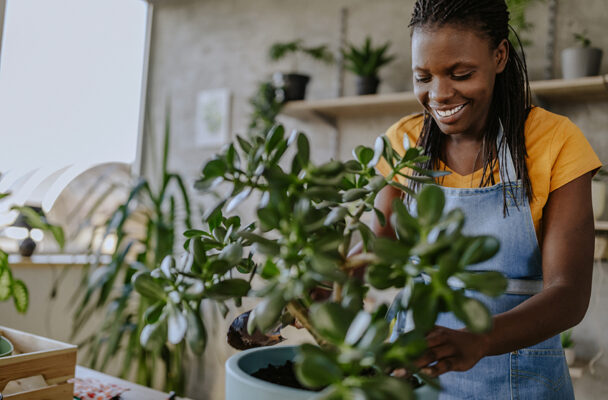 How to repot a plant in 4 easy steps without killing it