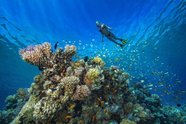 You Can Help Save the World's Coral Reefs by Playing This Game on Your Phone
