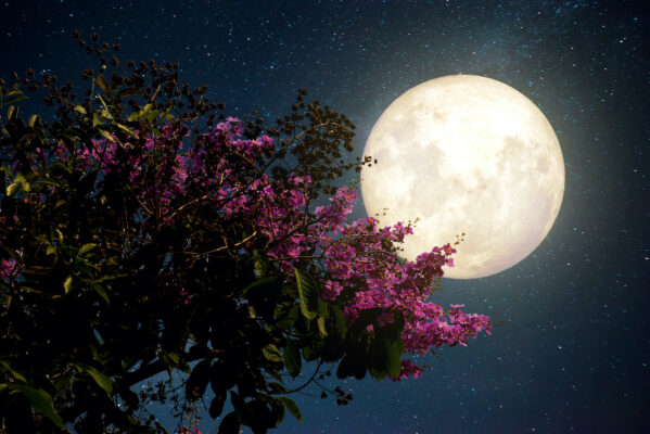 This month's full pink moon is also a powerful supermoon—here's what it means for your sign