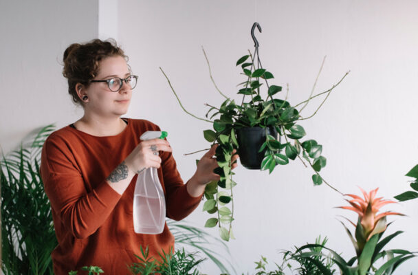 The 6 most common mistakes people make with their indoor plants