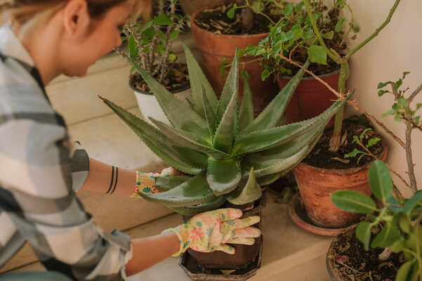 Here's How to Revive Your Sad Plant From the Brink of Death