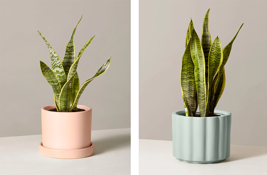 best bedroom plants to make your space feel dreamy  wellgood