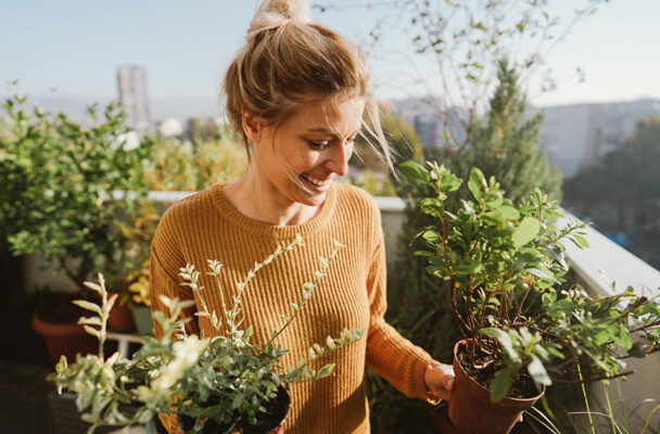 'Companion planting' is the greenest way to make your herb garden thrive