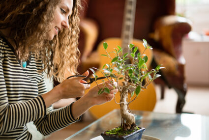 7 tiny desk trees to really make your WFH space bloom