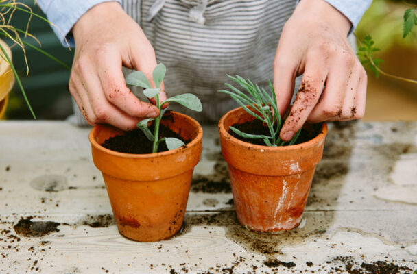 5 easy plants to propagate whether you know what you're doing or not