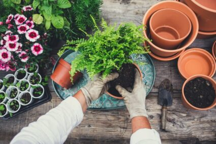 Gardening is actually a sneaky form of meditation—here's the reward you'll get from it