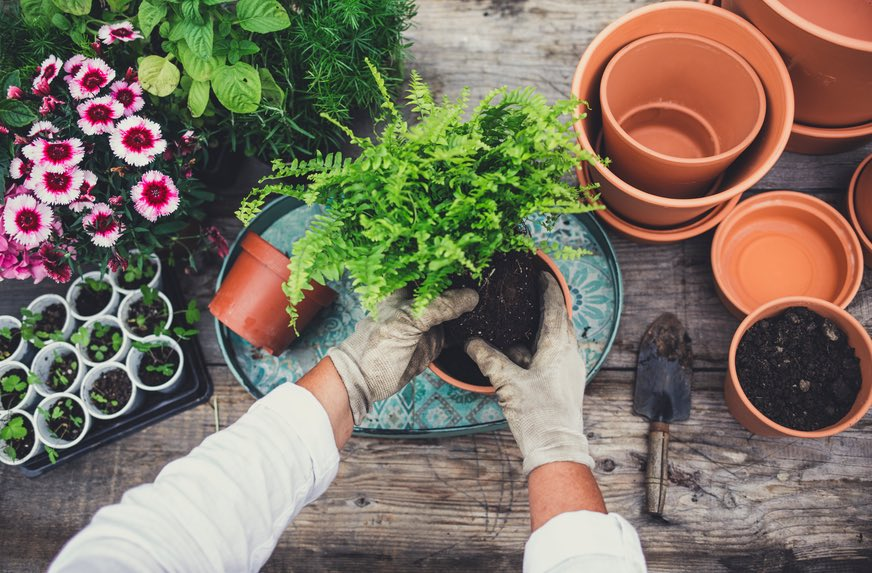Thumbnail for Gardening is actually a sneaky form of meditation—here's the reward you'll get from it