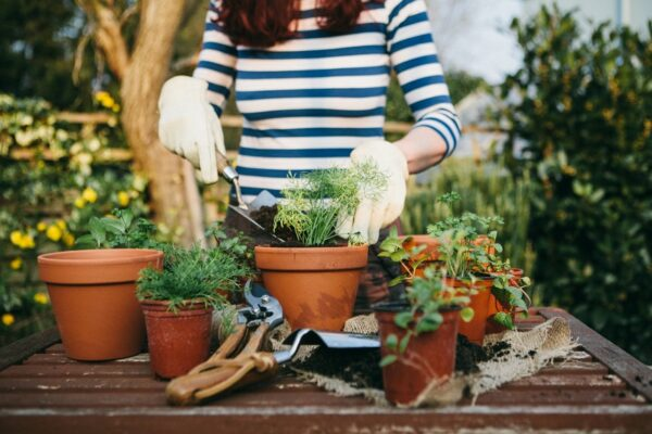 8 Online Gardening Classes and Workshops That'll Give You the Greenest Thumb