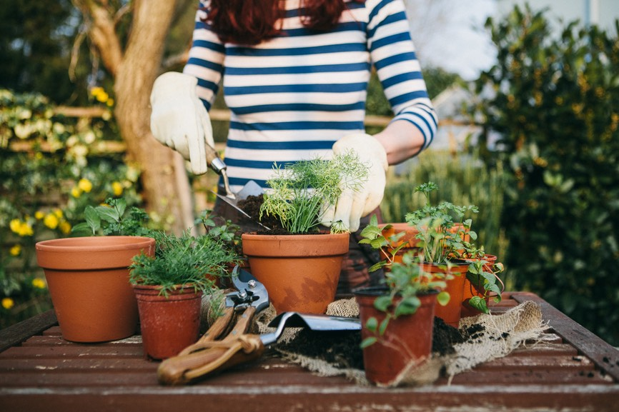 Thumbnail for 8 Online Gardening Classes and Workshops That'll Give You the Greenest Thumb
