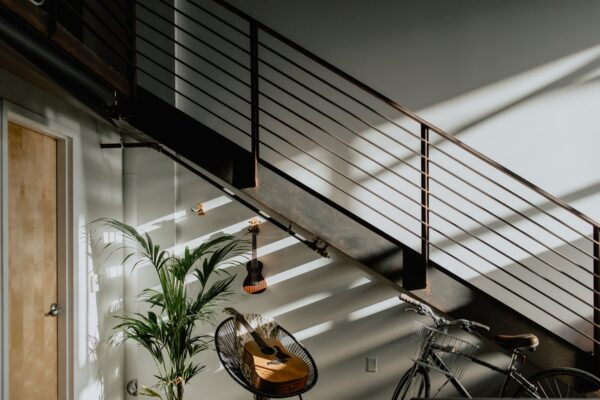 How to measure light for plants in your home before they wither and die