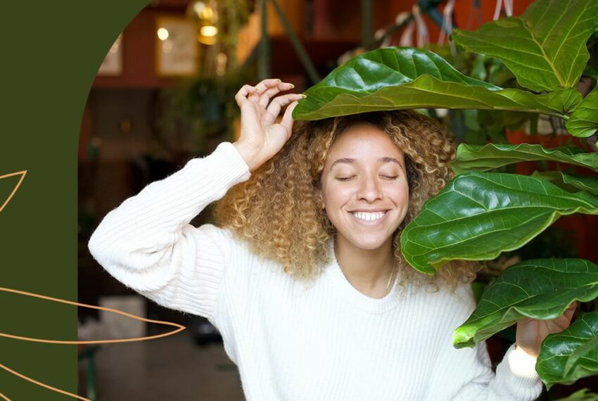 How To Care for Your Fiddle-Leaf Fig, the Most Dramatic of All Houseplants