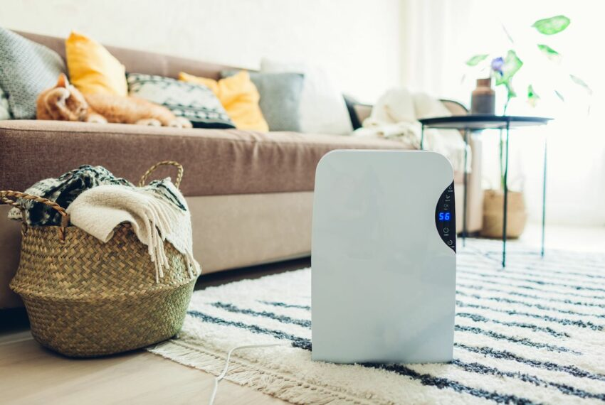 What's the Difference Between a Humidifier, a Dehumidifier, and an Air Purifier?