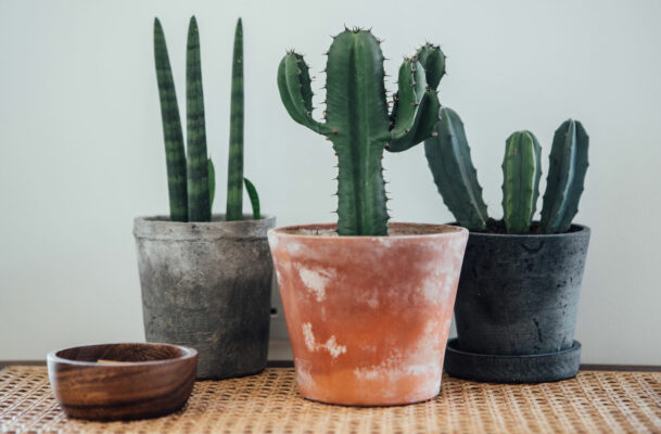How to Care for Your Cactus, the Sharpest-Looking Houseplant of Them All