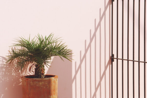 How To Care for a Palm Plant, One of Humankind's Longest-Running Faves