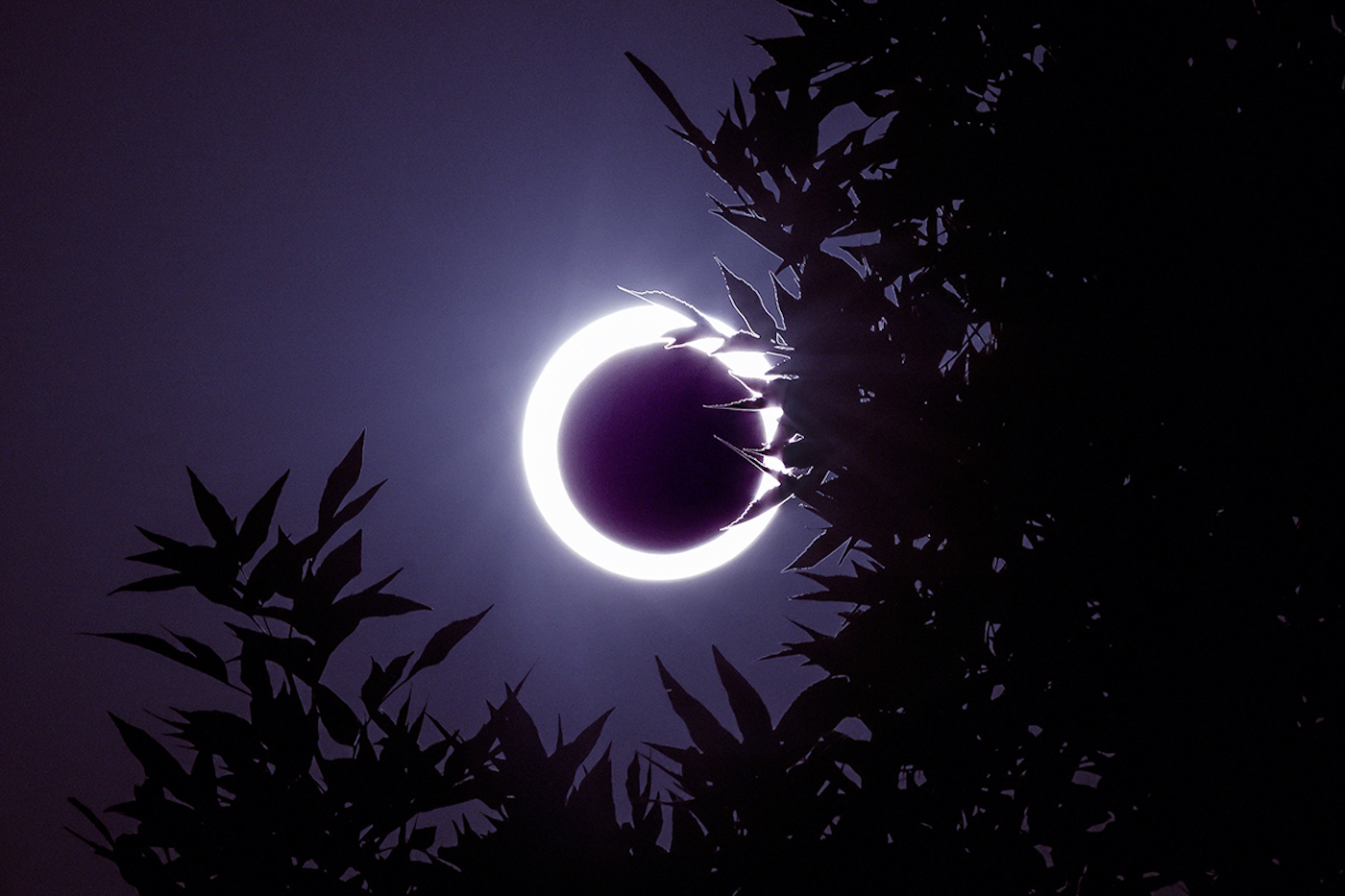 Thumbnail for What This Weekend's 'Ring of Fire' Solar Eclipse Means for Your Astrological Sign