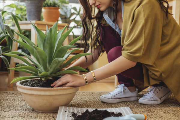 Your Houseplant Has Bugs—Now What? Here's How To Get Rid of Common Pests