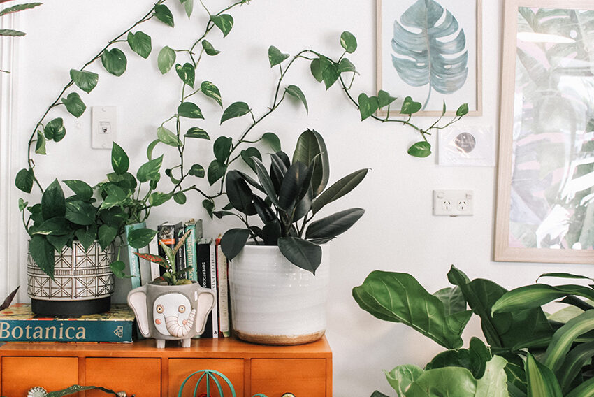 Your Air Conditioner Doesn't Get Along With Your Plants—Follow This Rule To Keep Them Alive