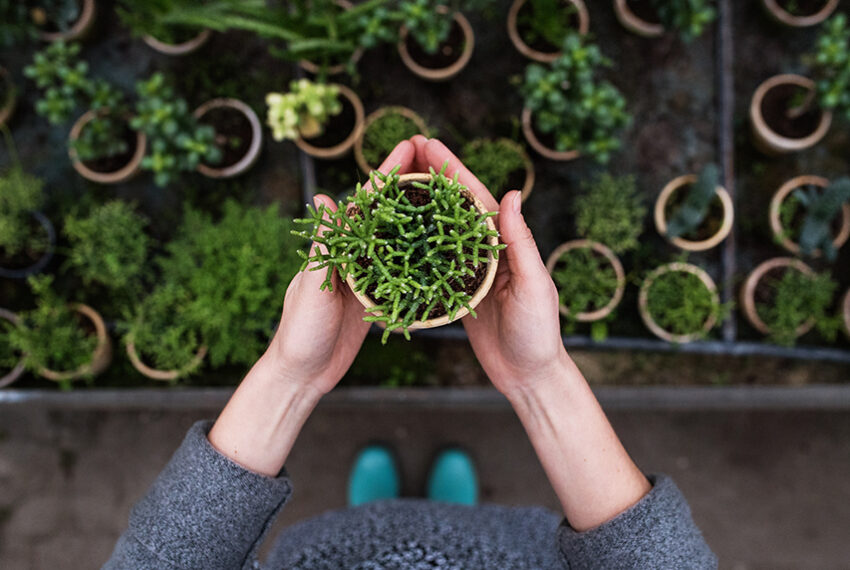 How To Pick a Plant That's Happy and Healthy—And What To Avoid