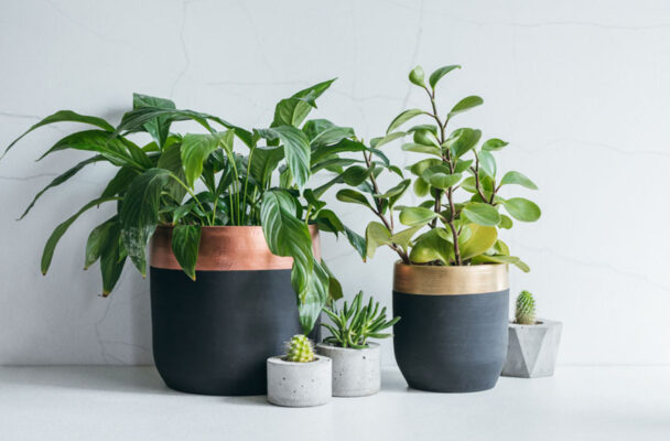 11 Unique Pots To Complement Your Most Beautiful Plants