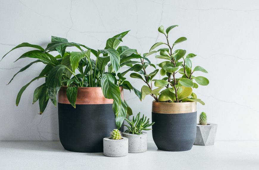Thumbnail for 11 Unique Pots To Complement Your Most Beautiful Plants