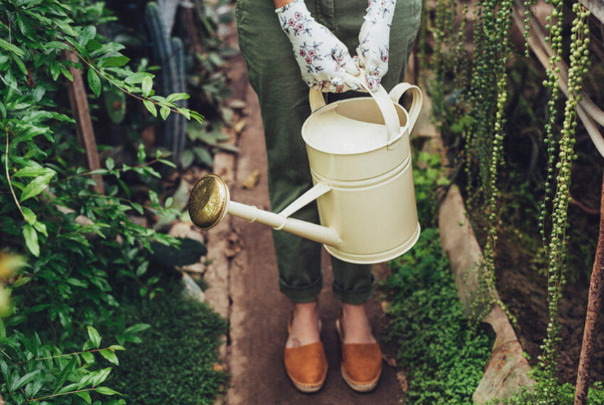 The Best Time To Water Your Plants Is Before Sunrise—Here's Why