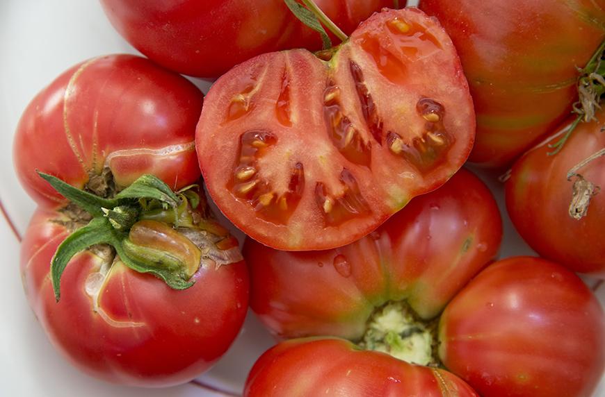 how to harvest garden seeds