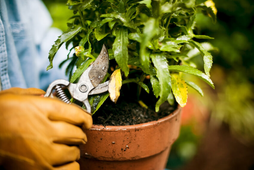 The One Skill You Need To Encourage Healthy Growth for Your Plants