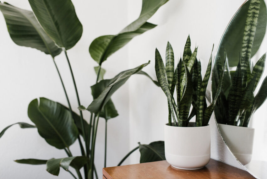 9 Self-Watering Pots That Make It Nearly Impossible To Kill Your Plants