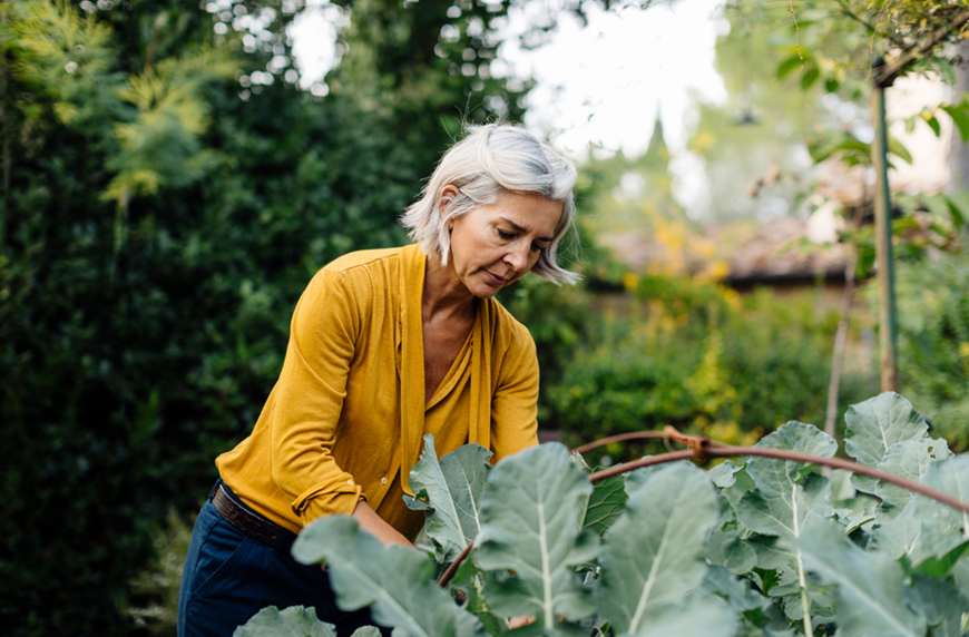 How To Harvest All Kinds of Seeds In Your Garden